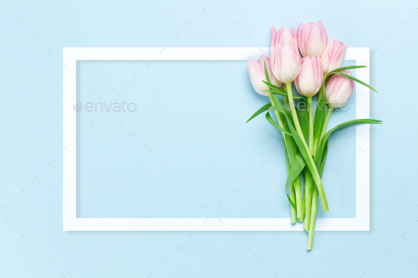 Pink tulips over blue background - Stock Photo - Images