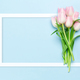 Pink tulips over blue background - PhotoDune Item for Sale