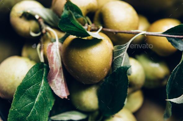 Juicy Ripe Yellow Apples - Stock Photo - Images