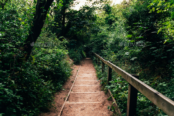 Wooden stairs in amazing green forest - Stock Photo - Images