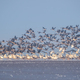 winter migratory bird landscape - PhotoDune Item for Sale