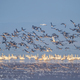 flock of migratory birds scene - PhotoDune Item for Sale