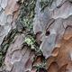 pine skin macro - PhotoDune Item for Sale
