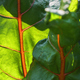 Sunlight and shadow on the vegetable leaves - PhotoDune Item for Sale