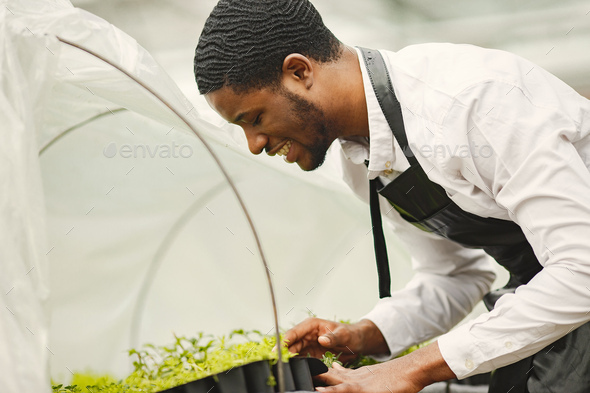Guy takes care of plants in greenhouse - Stock Photo - Images