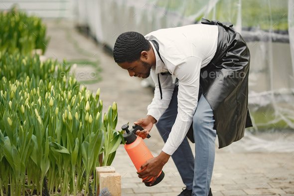 African guy works in garden and waters flowers - Stock Photo - Images