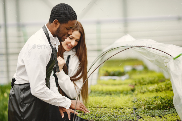 Guy and girl gardeners take care of plants in a greenhouse - Stock Photo - Images