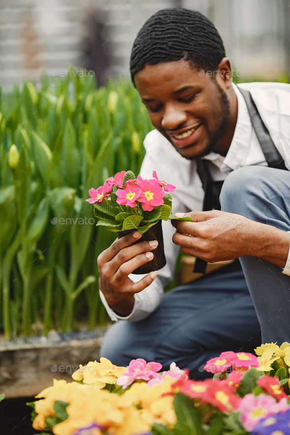Gardener inspects flowers in a pot in greenhouse - Stock Photo - Images