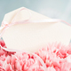 Blank Tag in Bouquet of Pink Carnations. - PhotoDune Item for Sale