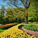 Blooming tulips flowerbeds in Keukenhof flower garden, Netherlan - PhotoDune Item for Sale