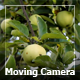 Moving Camera In A Garden 3 - VideoHive Item for Sale