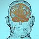 Anatomical HUD&UI Titles - VideoHive Item for Sale