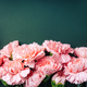 Frame Made of Pink Carnations on Dark Green Background. - PhotoDune Item for Sale