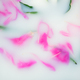 Petals of peonies in a milk bath. Place for text. - PhotoDune Item for Sale