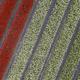 Tulip field Aerial view - PhotoDune Item for Sale