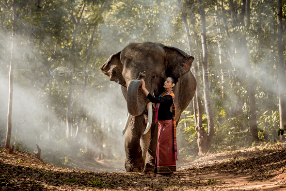 Elephant and woman in Thailand - Stock Photo - Images