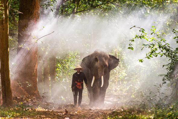 Elephant at sunrise in Thailand - Stock Photo - Images