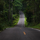 The asphalt road straight into the forest - PhotoDune Item for Sale