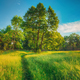 Summer Sunny Forest Trees, Green Grass, Lane, Path, Pathway. Nature Wood Sunlight - PhotoDune Item for Sale