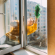 Caucasian Woman Of Fifty In A Yellow Sweater And Jeans Washes A Dusty Window In Apartment. A 50 Year - PhotoDune Item for Sale