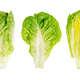 Romaine lettuce hearts, whole and cross sections of cos lettuce heads - PhotoDune Item for Sale