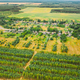 Aerial View Green Forest Deforestation Area Landscape Near Village. Top View Of New Young Growing - PhotoDune Item for Sale
