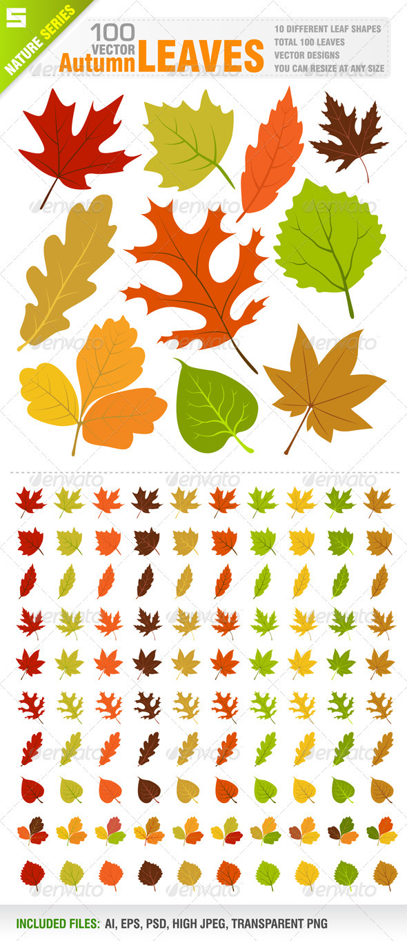 100 Autumn Leaves - Flowers & Plants Nature