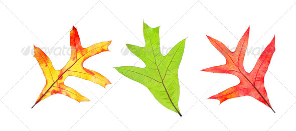 Fall leaf collection - Stock Photo - Images