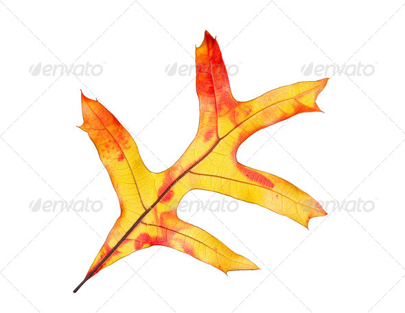 Isolated leaf - Stock Photo - Images