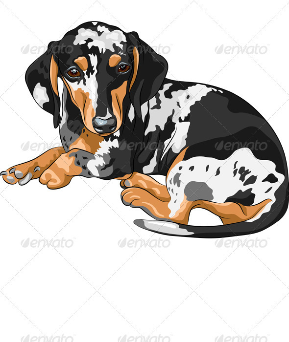 Vector Sketch Dog Dachshund Breed Lying - Animals Characters