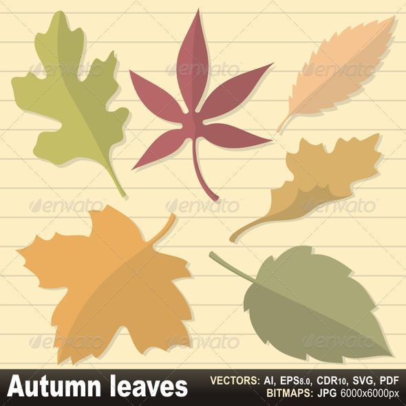 Autumn leaves - Decorative Symbols Decorative