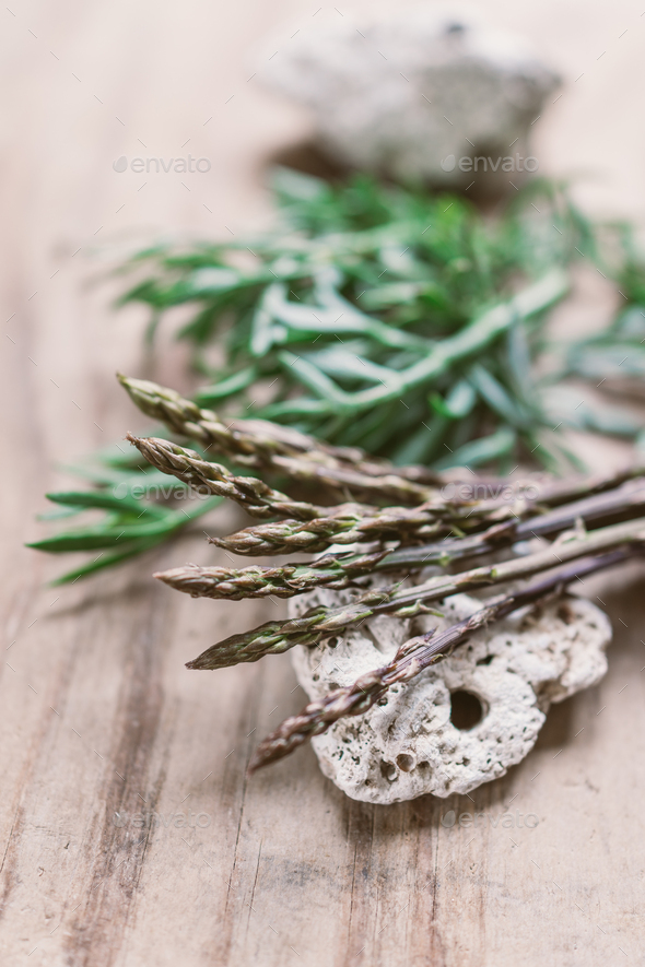 Wild asparagus and sea fennel - Stock Photo - Images