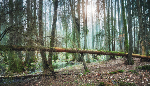 Deep woods - Stock Photo - Images