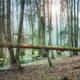 Deep woods - PhotoDune Item for Sale