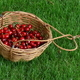 Cherries basket - PhotoDune Item for Sale