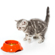 cute little kitten looking at plastic bowl with cat food isolated on white - PhotoDune Item for Sale