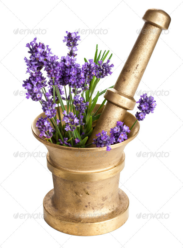 mortar with lavender isolated - Stock Photo - Images