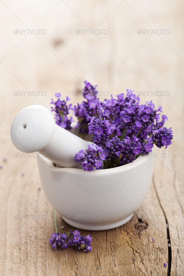 fresh lavender in mortar - Stock Photo - Images