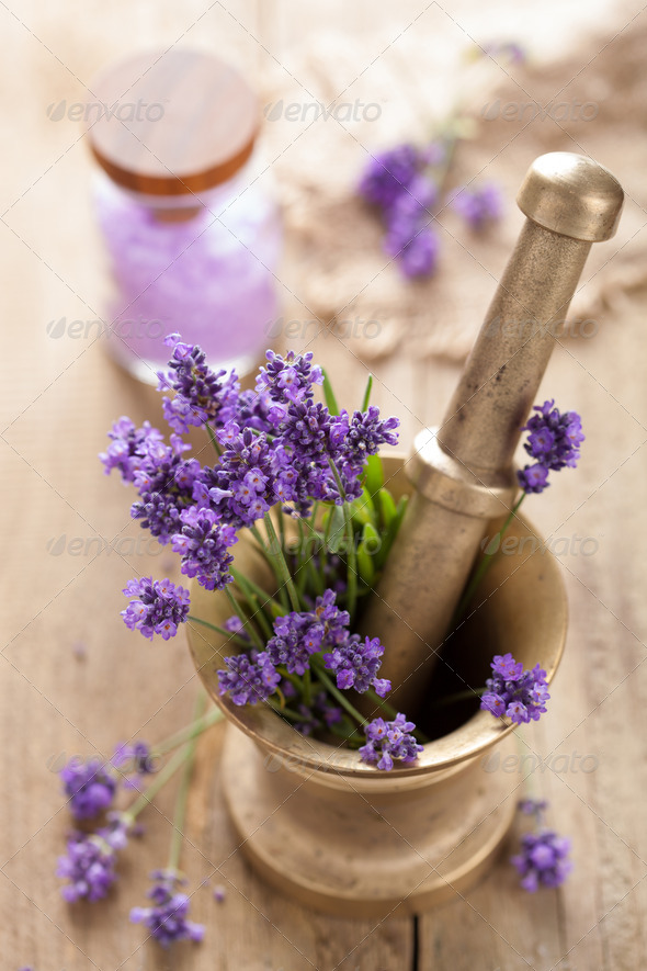 mortar with fresh lavender - Stock Photo - Images