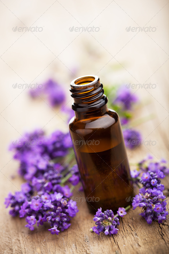 essential oil and lavender flowers - Stock Photo - Images