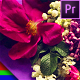 Romantic Slideshow - Premiere Pro | Mogrt - VideoHive Item for Sale