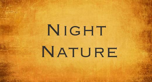 Night Nature