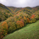 Devesa da Rogueira is the best preserved Galician native forest - PhotoDune Item for Sale