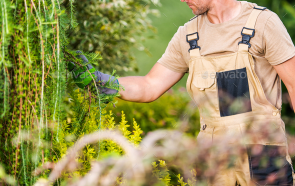Professional Gardener Performing Plants Health Checkup - Stock Photo - Images