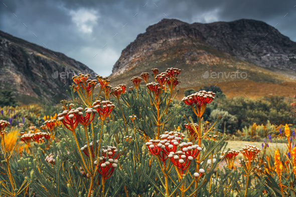 Sauth African Landscape - Stock Photo - Images