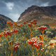 Sauth African Landscape - PhotoDune Item for Sale