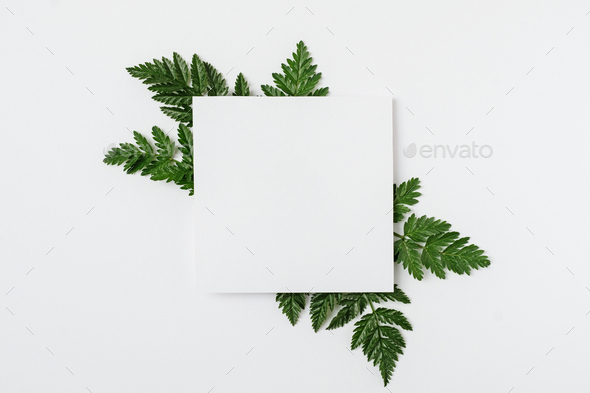 Sheet of paper with green branches - Stock Photo - Images