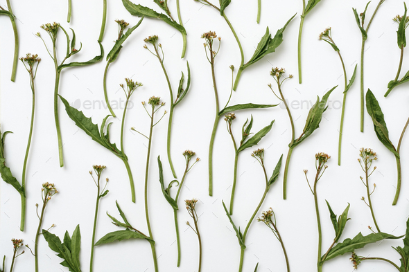 Pattern with a plant - Stock Photo - Images