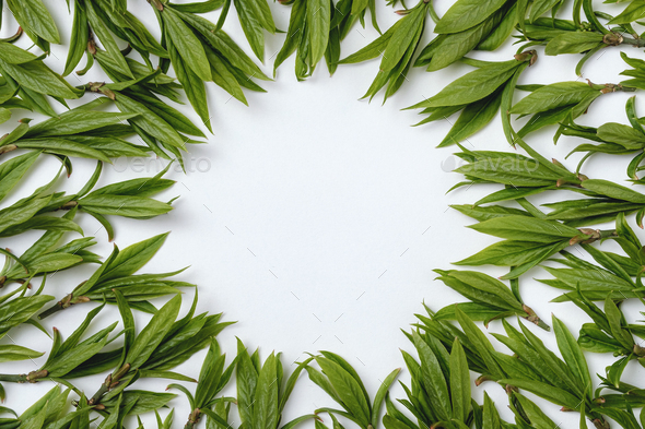 Green leaves on a white background - Stock Photo - Images