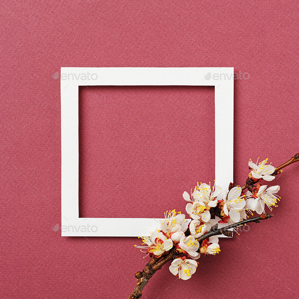 White frame and apricot branch with flowers - Stock Photo - Images